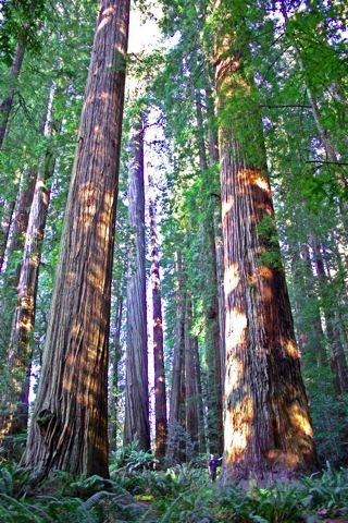 Attractions Ramblin Redwoods Campground Amp Rv Park